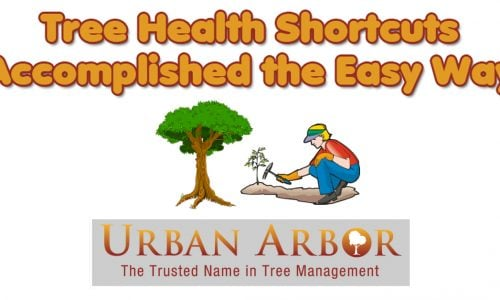 Tree Health Shortcuts Accomplished the Easy Way