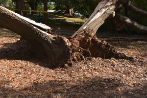 stay safe and assess your tree risk today