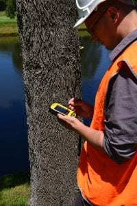 always use a qualified level 5 arborist for any tree reports or risk assessment work